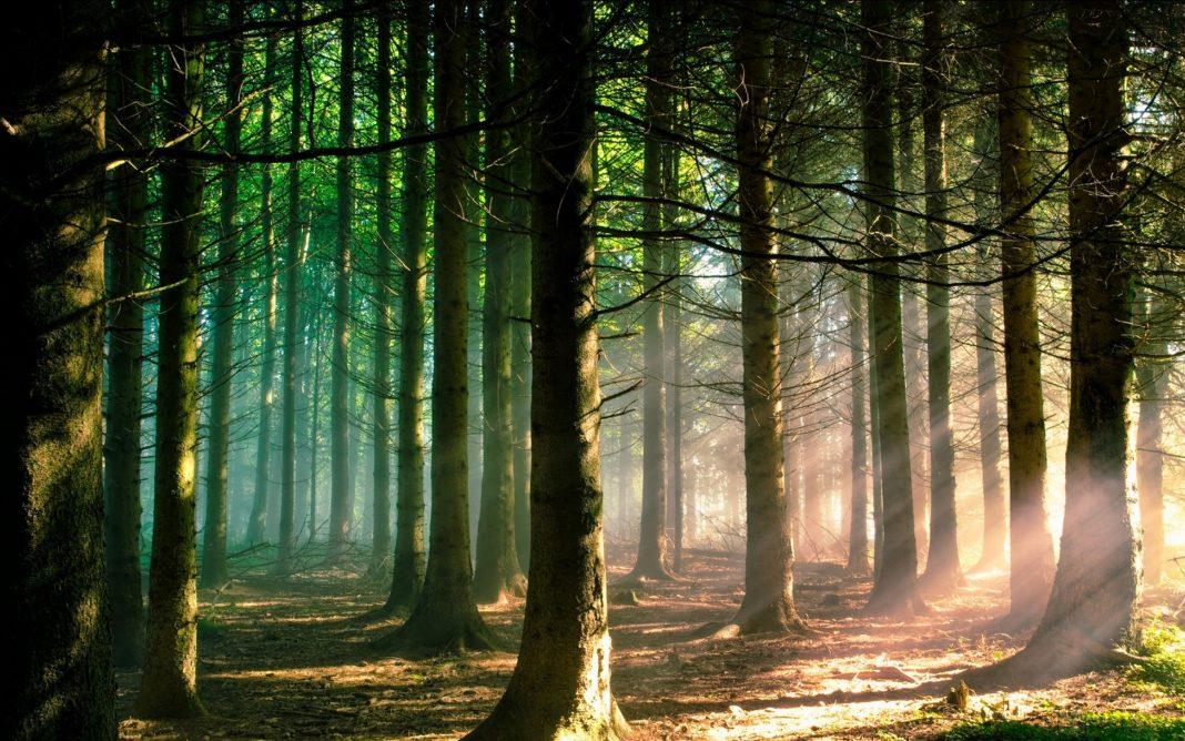 Αποκτώντας οικολογική - συστημική συνείδηση | Μαρίνα Χατζηθεολόγου | Anthia.net