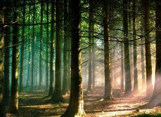 Αποκτώντας οικολογική - συστημική συνείδηση - Anthia.net