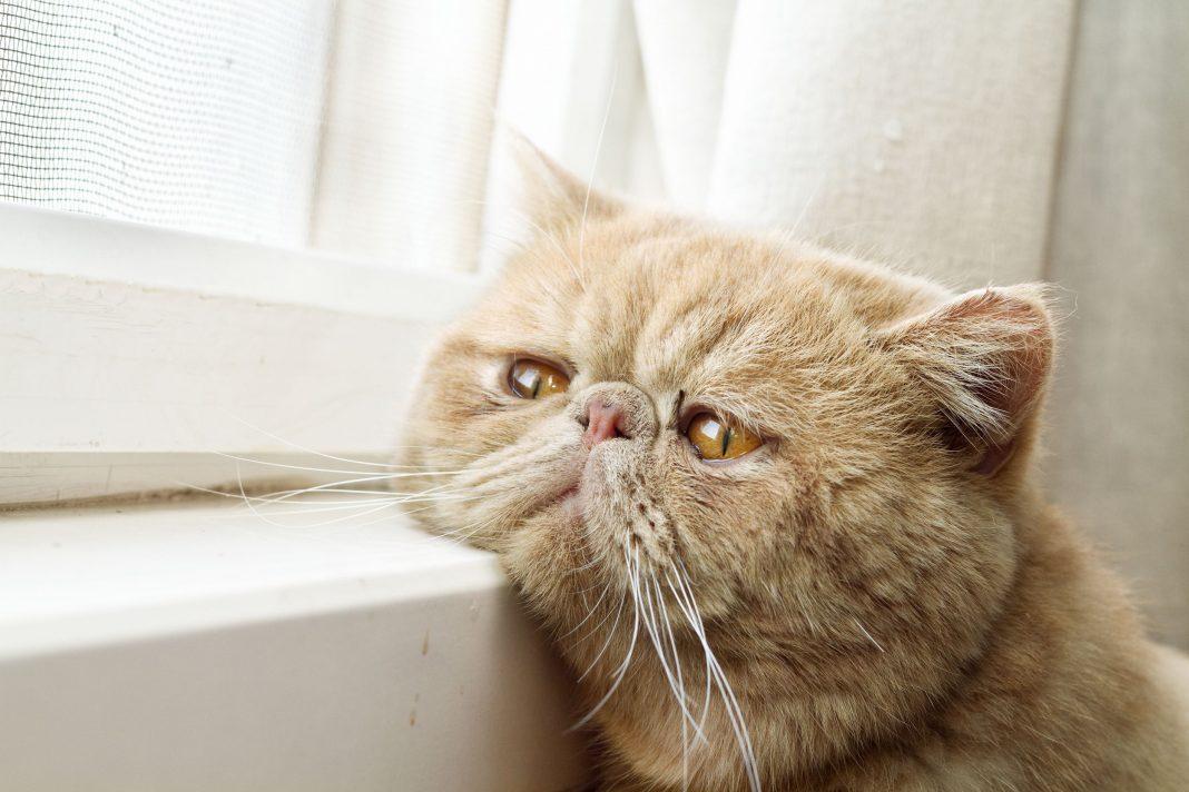 2edcca6a2c4a Ποιοι πρέπει να αλλάξουν συμπεριφορα  Η γάτα μας ή εμείς ...