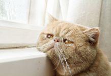 Ποιοι πρέπει να αλλάξουν συμπεριφορα; Η γάτα μας ή εμείς; | Βελούδινες Πατούσες | Anthia.net