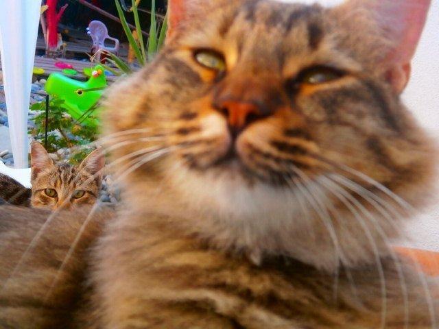 Γιατι μια γάτα νιαουριζει; | Βελούδινες Πατούσες | Anthia.net
